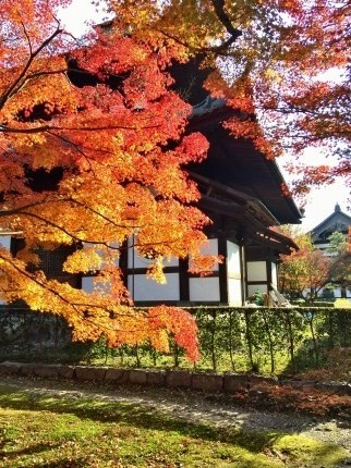 東福寺紅葉 (2)