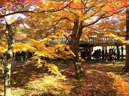東福寺紅葉 (4)