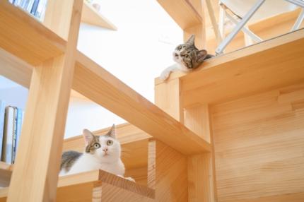 猫の居る家藤原・室 建築設計事務所 (3)
