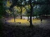奈良:落ち葉