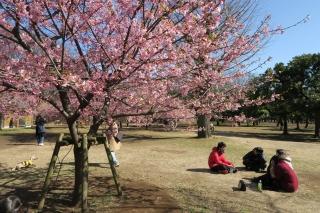 東京代々木公園