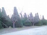 大阪城の植栽