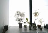 昭和町の家 植栽