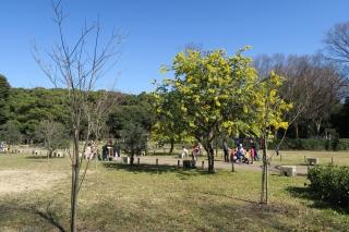 東京代々木公園2