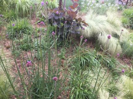 奈良学園前の庭 (2)