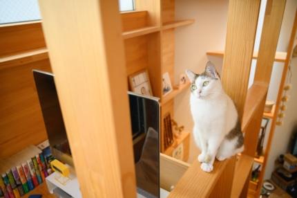 猫の居る家藤原・室 建築設計事務所 (2)