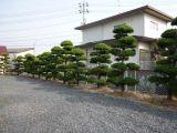 岡山の敷地