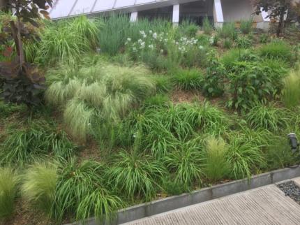 奈良学園前の庭 (3)