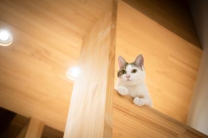 猫の居る家藤原・室 建築設計事務所