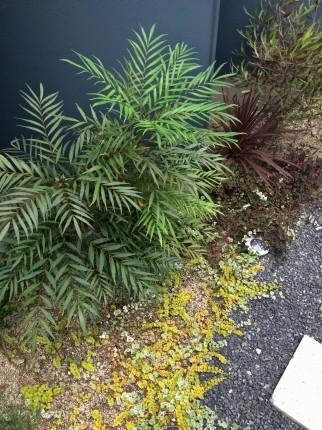 広島福山の庭2