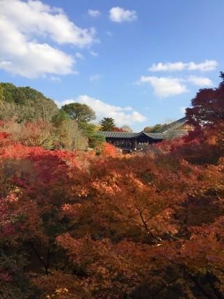 東福寺紅葉 (5)