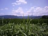 三重県の畑