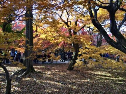 東福寺紅葉 (3)