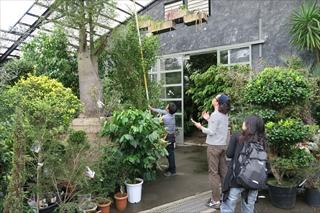 大阪石切り植栽