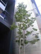 大阪:東住吉の家 植栽