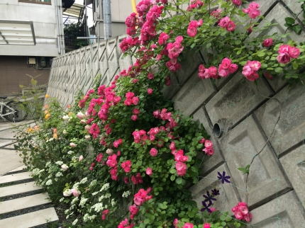 広島福山の庭