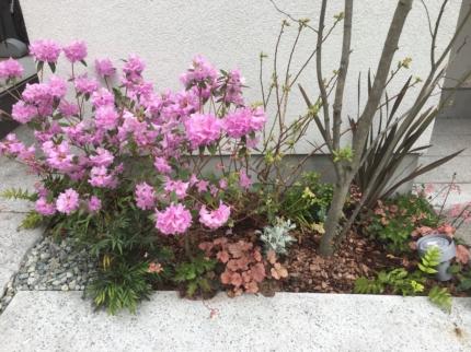 大阪上本町の家植栽