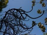 植物の枝の形
