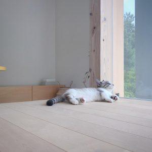 兵庫姫路建築家住宅設計 (3)