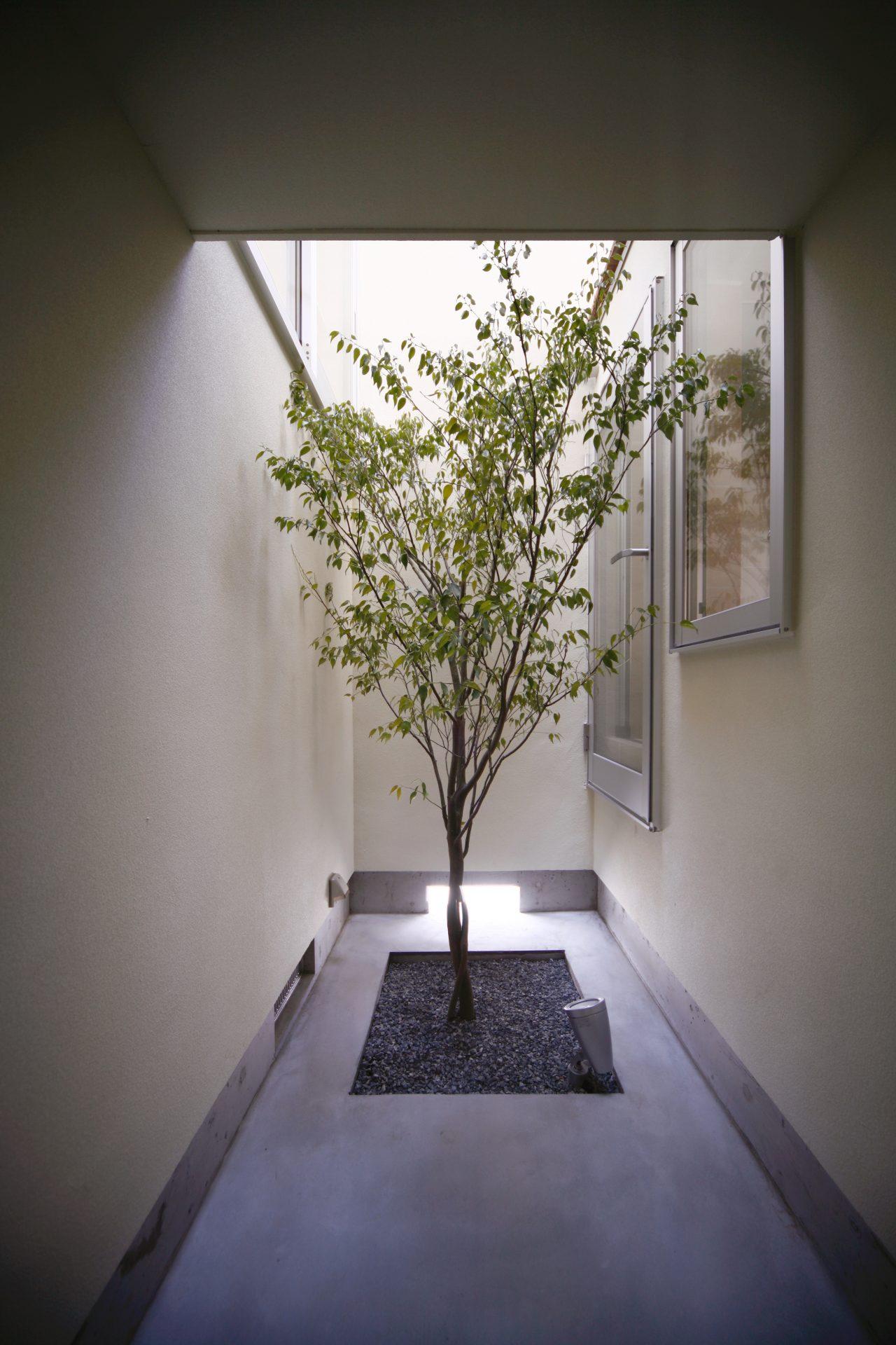 大阪和泉の家の中庭